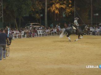 caballos2308